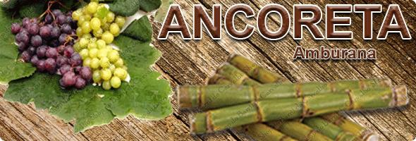 Banner-Ancoreta-Amburana.png